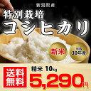 【送料無料】新潟県産 特別栽培コシヒカリ 10kg【平成30年度産】
