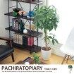 観葉植物 パキラトピアリー1.2