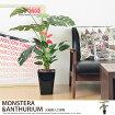 観葉植物 モンステラ&アンスリューム95