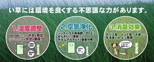 い草寝ござ大目舞子88×180cmベージュ・ブルー