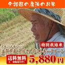 【25年産】滋賀県産石居さんのミルキークイーン10kg【送料無料】【特別栽培米】【生産者限定米】