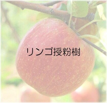 苗物, 果物の苗物  1