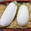 ナス揚げてトルコ接木ポット苗3株(入荷予定:2019年4月頃)