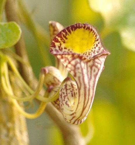 苗物, 花の苗物  120216