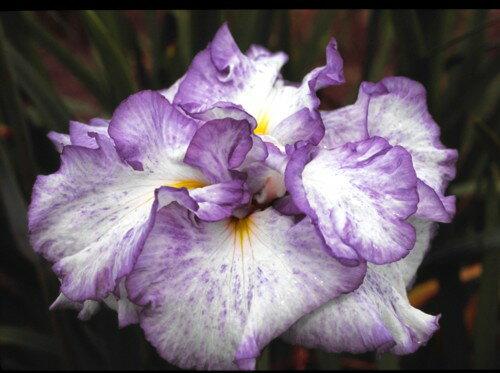 苗物, 花の苗物  3.5 1202110