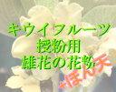 人工授粉用キウイ 花粉&ぼん天 1セット