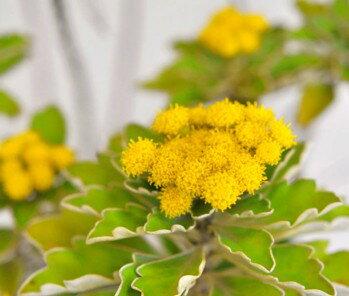苗物, 花の苗物  2