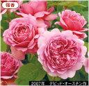 バラ プリンセス アレキサンドラ オブケント 接木大苗 1本(入荷予定:2011年2月頃)