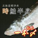 船上一本〆 北海道標津産 冷凍 生時鮭 半身 【時鮭】【トキサケ】【時不知】【時知らず】【時し…