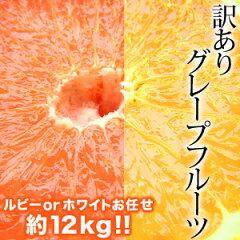 ワケあり/グレープフルーツ/ルビーグレープフルーツ/送料無料訳ありグレープフルーツ×約12kg[...