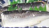 にしん飯寿司2kg 送料無料 いずし 北海道 名産 にしん