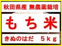 【新米】【29年産】【秋田県産】【無農薬】【きぬのはだ】安心で美味しいもち米5kg