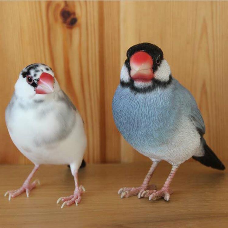 卓上の癒やし。リアルな文鳥クリップホルダー