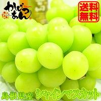 島根県産 シャインマスカット 1房入り 皮のついたまま丸ごと食べられるぶどうの新品種 敬老の日のギフトにおすすめ