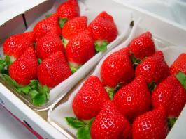 福岡県産 イチゴ あまおう とよのかの後継品種として誕生した九州を代表するブランド苺♪ ホワイトデーのプレゼントにおすすめ チョコ以外 ひな祭り 出荷予定:12月上旬〜