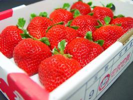 【送料無料】福岡県産 特選 あまおう 大粒12入り 甘さ、食味の良さ、香りを併せ持つ苺の逸品!…