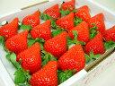 徳島県佐那河内村産 さくらももいちご 16粒入り 市場へ出荷されて間もない苺の新品種!甘さ抜群でとっ ...
