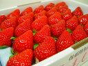 徳島県佐那河内村産 さくらももいちご 28粒入り 市場へ出荷されて間もない苺の新品種!甘さ抜群でとっ ...