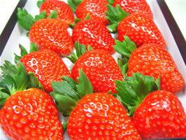 「あすかルビー」以来、10年の時を経て誕生したイチゴの新品種!ブレイク間違いなしのいちごの...