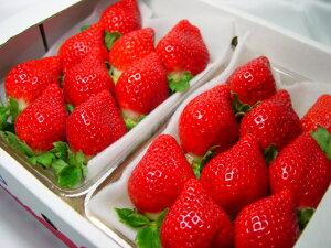 【送料無料】福岡県産イチゴ あまおう  九州を代表するブランド苺!とよのかに次ぐ期待の後継品種…