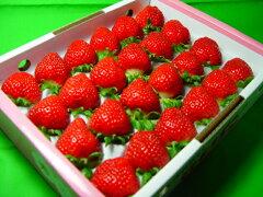 大阪市場にしか入荷しない幻の苺!三十数件の農家でしか栽培されていない「ももいちご」は入手...
