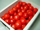 長野県産ハウス栽培さくらんぼ 香夏錦 バラ詰300g ハウスで栽培された極上サクランボ  さくらんぼ ...