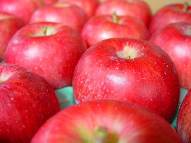 フルーツ・果物, りんご 10kg 825 972