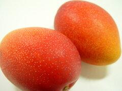 国産マンゴーの逸品・宮崎県産完熟マンゴー!宮崎産マンゴーは他のマンゴーと一味違う美味しさ...