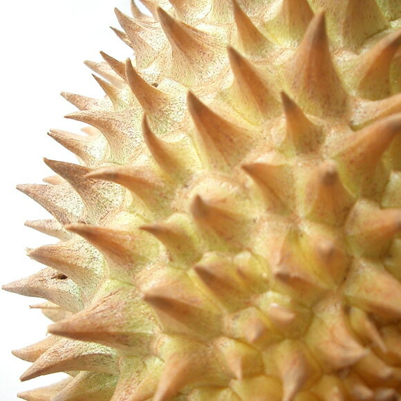 一度食べるとヤミツキ♪フルーツの王様・ドリアン4玉