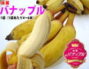 送料無料¥1,680テレビ番組で話題沸騰!まるでりんごのよう!?フルーティーなデザート系バナナ...