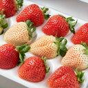 福岡産紅白いちごあまおう&白いちごギフト箱(12〜15粒)