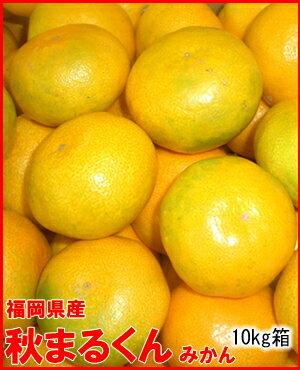 フルーツ・果物, みかん 10kg6,550
