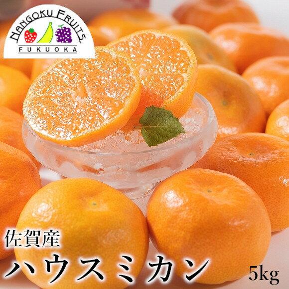 フルーツ・果物, マンゴー  5kg