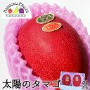 送料無料 太陽のタマゴ4L2玉(超大玉)宮崎産完熟マンゴーギフト箱 宮崎産 完熟