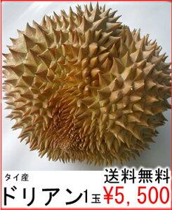 送料無料¥5,500楽天市場、販売実積NO1一度食べるとヤミツキ独特の香りと食感は、忘れられない...