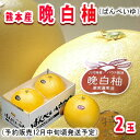 【予約販売】熊本産晩白柚(ばんぺいゆ)2玉【常温便】 - 南国フルーツ-果実村TOKIO