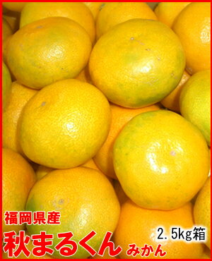 フルーツ・果物, みかん 2.5kg