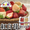 【予約販売・送料無料】福岡産 紅白いちご (あまおう&白いち