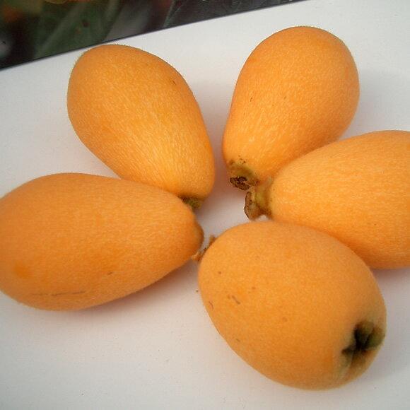 フルーツ・果物, びわ 5-6