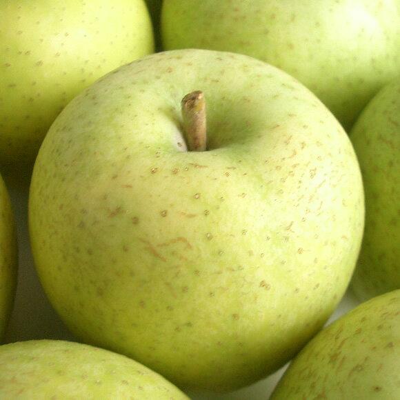 フルーツ・果物, りんご  15