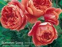 カップからロゼット咲きになる、花持ちの良い優良品種。ブロンズが入った濃いオレンジ色で、と...