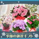 季節の鉢花 ギフト ラッピング メッセージカード 対応 プレ...