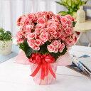 選べる季節の鉢花 花かごギフト「アザレア」「ベゴニア」「カラ...