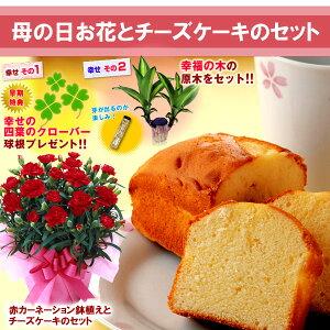 【母の日ギフト】赤カーネーションと幸福の木チーズケーキセット