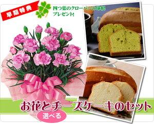 母の日専用【送料無料】心もおなかも満たせるスィーツとお花のプレゼント!母の日ギフトにおす...