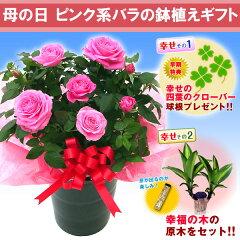 【送料無料】早期ダブル幸せ特典【母の日ギフト】ピンク系バラの鉢植えギフト
