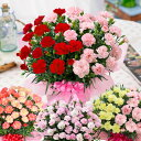 母の日 プレゼント カーネーション 花 ギフト 鉢植え 大きなカーネーション鉢植えギフト 2色咲き6