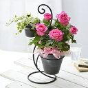 母の日ギフト デュエットローズ バラ アイビー 観葉植物 特典付き