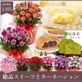 母の日ギフトカーネーションとスイーツセット!花もお菓子も楽しめるプレゼント