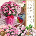 母の日ギフト2色咲きコンビネーション!カーネーション鉢植えギフト6号鉢に選べる特典「幸福の木」またはレインボーローズ